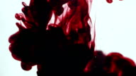Abstract dynamic flow of dark red blood ink in water on white background video