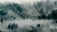 abstract fog forest video