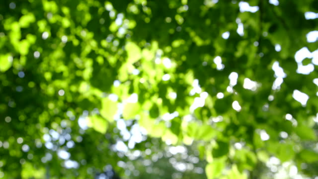 Abstract fresh green Leaves against the Sun - defocused video