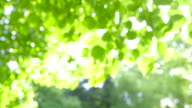 Abstract fresh green Leaves against the Sun in the Wind video