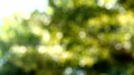 Abstract green leaves bokeh nature video