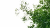 Abstract motion of bamboo leafs on white background video