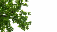 Abstract motion of green leafs on white background video
