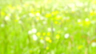 Abstract Nature Background - defocused video