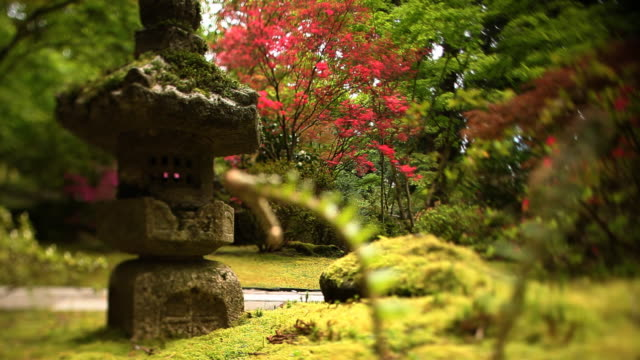 Abstract pink tree in zen garden with statue video