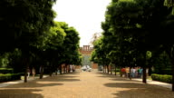 Acacia trees with dak green leaves on sunny springtime alley, perspective view with city life on background video