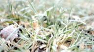 Across a frosty garden lawn video