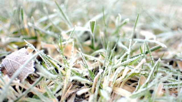 Across a frosty garden lawn video