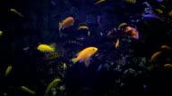 Actinia seaweed under water video