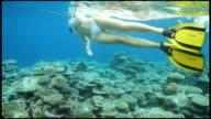 Admiring a pristine coral reef video
