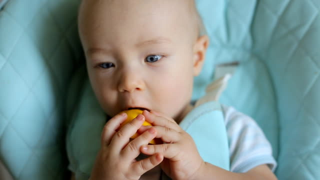 Adorable baby boy eating lemon video