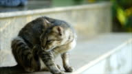 Adorable cat scratching itself video