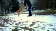 Adorable golden retriever dog playing ball with it's owner outdoors video