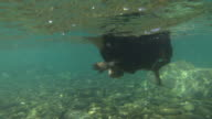 CLOSE UP, UNDERWATER: Adorable little dog swimming fast in cold refreshing river video
