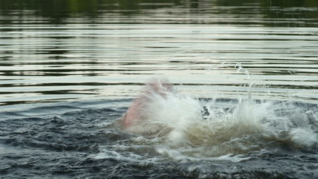 Adult drowning video