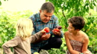 HD: Adult Farmer with Children video