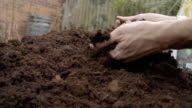 Adult Male Holding And Sieving Through Fresh Compost In Spring video