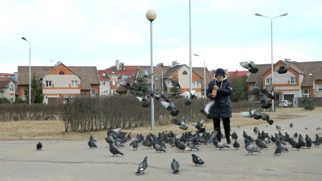 Adult woman feeding flock of pigeons and sparrows video