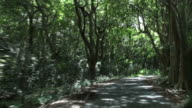 Adventurous drive on impressive avenue of calvaria trees video