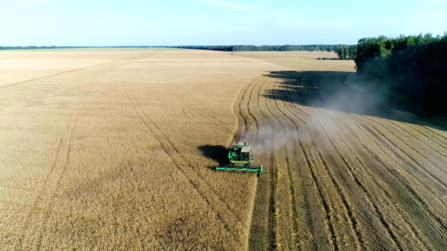 Aerial: A beautiful wheat field. A combine harvests a harvest. video