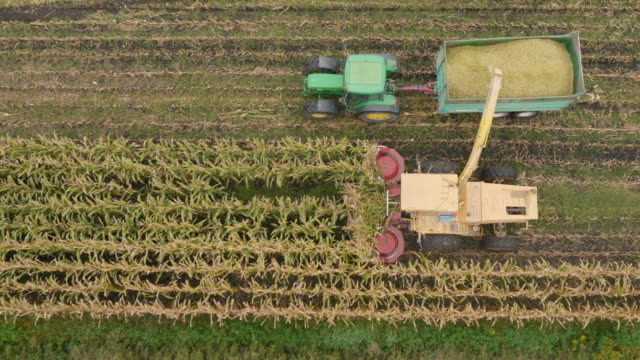 4K Aerial: Above Combine Corn Machines video