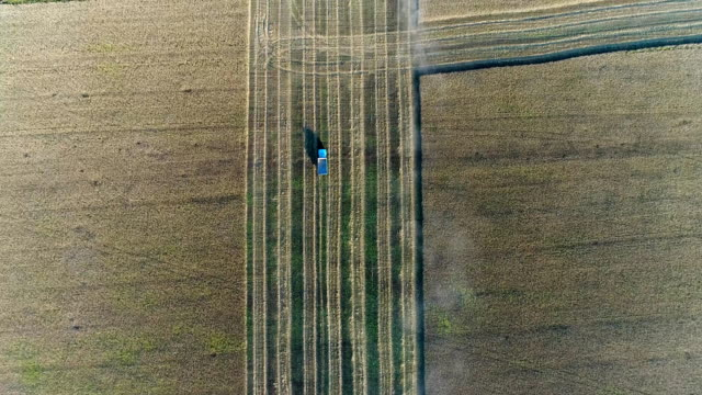 Aerial: Combine and lorry are working on the field, harvesting. View from above. video