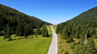 Aerial: descending above the car road in spruce forest valley with green field video