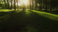Aerial drone gliding shot of a sunny forest park. video
