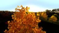Aerial Fall Flythrough video