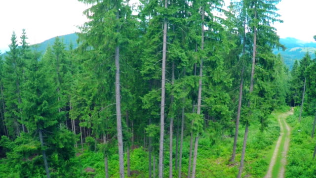 Aerial Flight in Carpathians Mountains. video