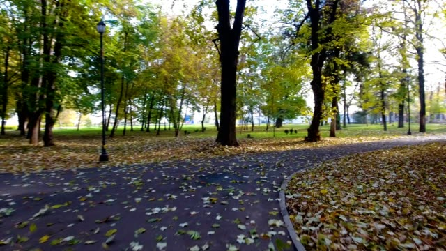 Aerial footage of autumnal nature scenery in city park video