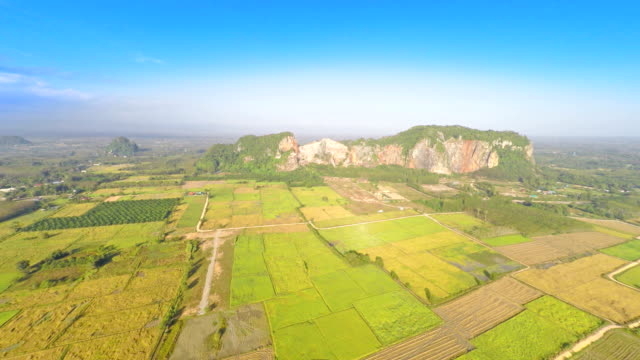 Aerial footage of rice field video