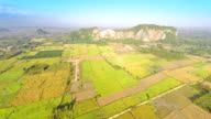 Aerial footage of rice paddy video