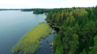 Aerial forest view at summer time with good weather video