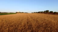 Aerial from wheat fields in Portugal video