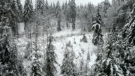 Aerial HD: Winter over wild forest glade video