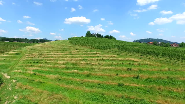 Aerial landscape of vineyard fields in Slovenia. video