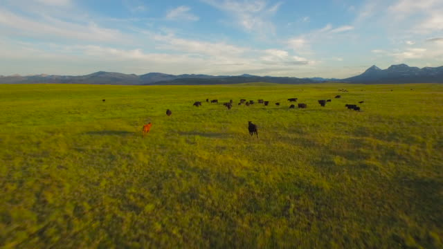 Aerial Montana Countryside video