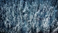 Aerial Moving Above Winter Forest video