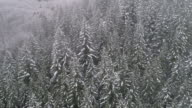 Aerial Nature Background Floating Over Snowy Forest Trees with Cold Winter Storm Weather video