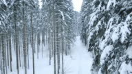 Aerial of a footpath through the snowy forest video