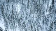 Aerial of a snow capped forest video