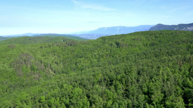 Aerial of a vast forest area of Slovenia video