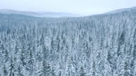 Aerial of a vast forest covered with snow video