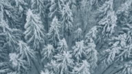 Aerial of forest in winter video
