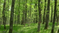 Aerial of forest underlayer on a sunny day video