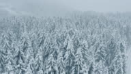 Aerial of snow covered forest of spruce trees video