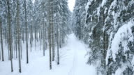 Aerial of snow covered path through the forest video