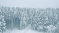 Aerial of snowcapped trees surrounding a white road video