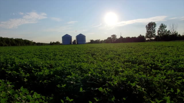 Aerial of Soy Crop video